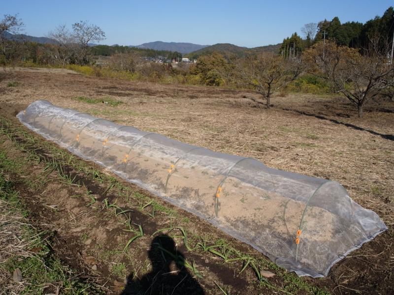 f:id:Greenweekends:20121125120443j:image:w640