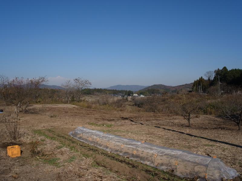 f:id:Greenweekends:20121209110557j:image:w640