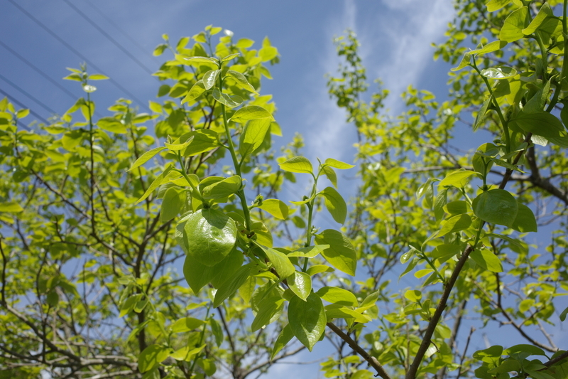 f:id:Greenweekends:20210424092707j:plain