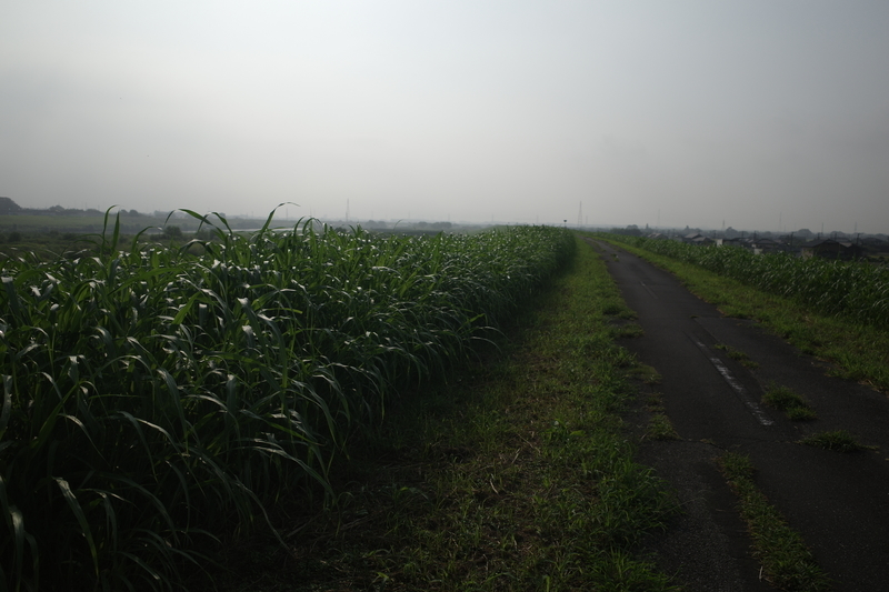 f:id:Greenweekends:20210828080128j:plain