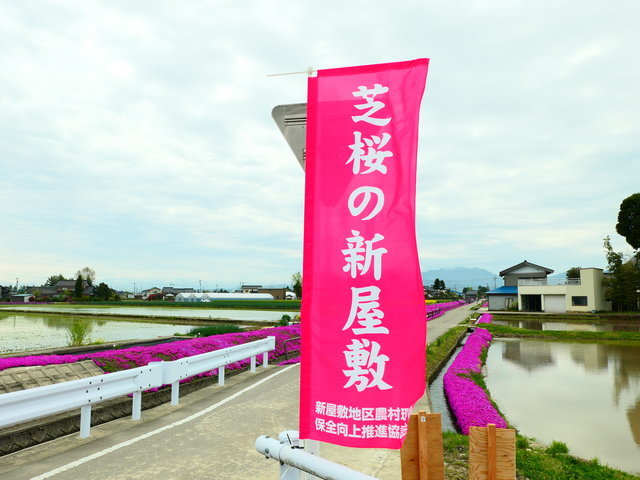 芝桜の新屋敷