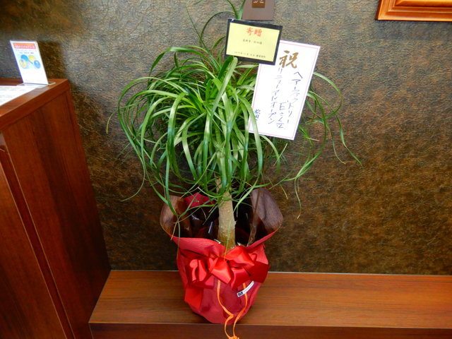 高岡市松田様 観葉植物