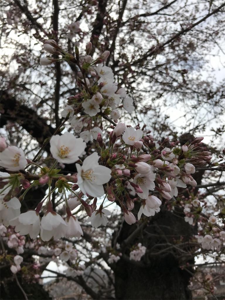 f:id:HIROAKI-ISHIWATA:20190331122348j:image