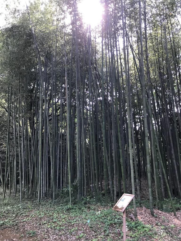 f:id:HIROAKI-ISHIWATA:20190519212540j:image