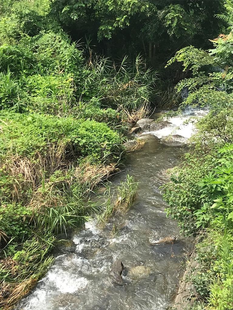 f:id:HIROAKI-ISHIWATA:20190803130344j:image