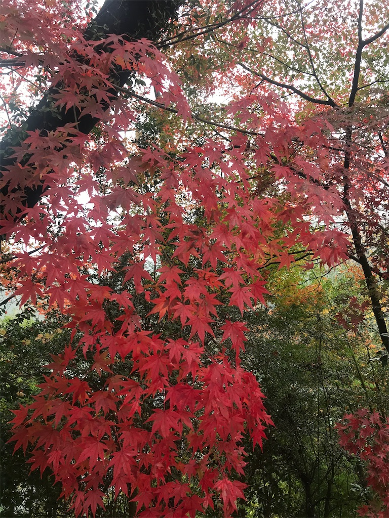 f:id:HIROAKI-ISHIWATA:20191124132251j:image