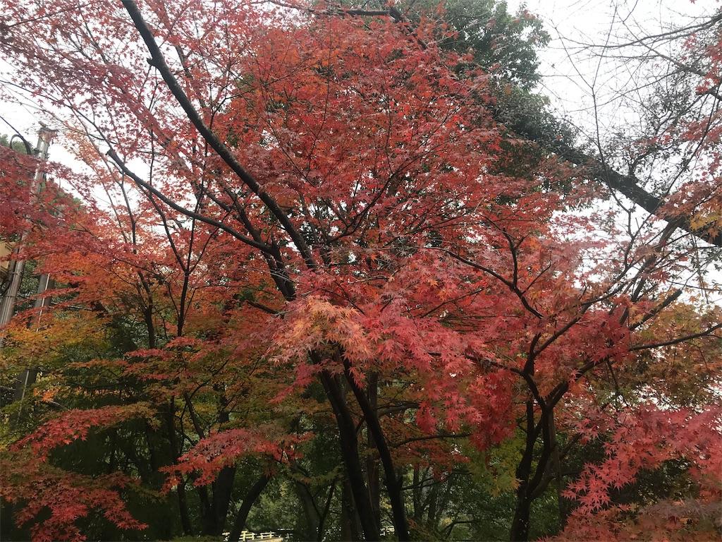 f:id:HIROAKI-ISHIWATA:20191124132304j:image