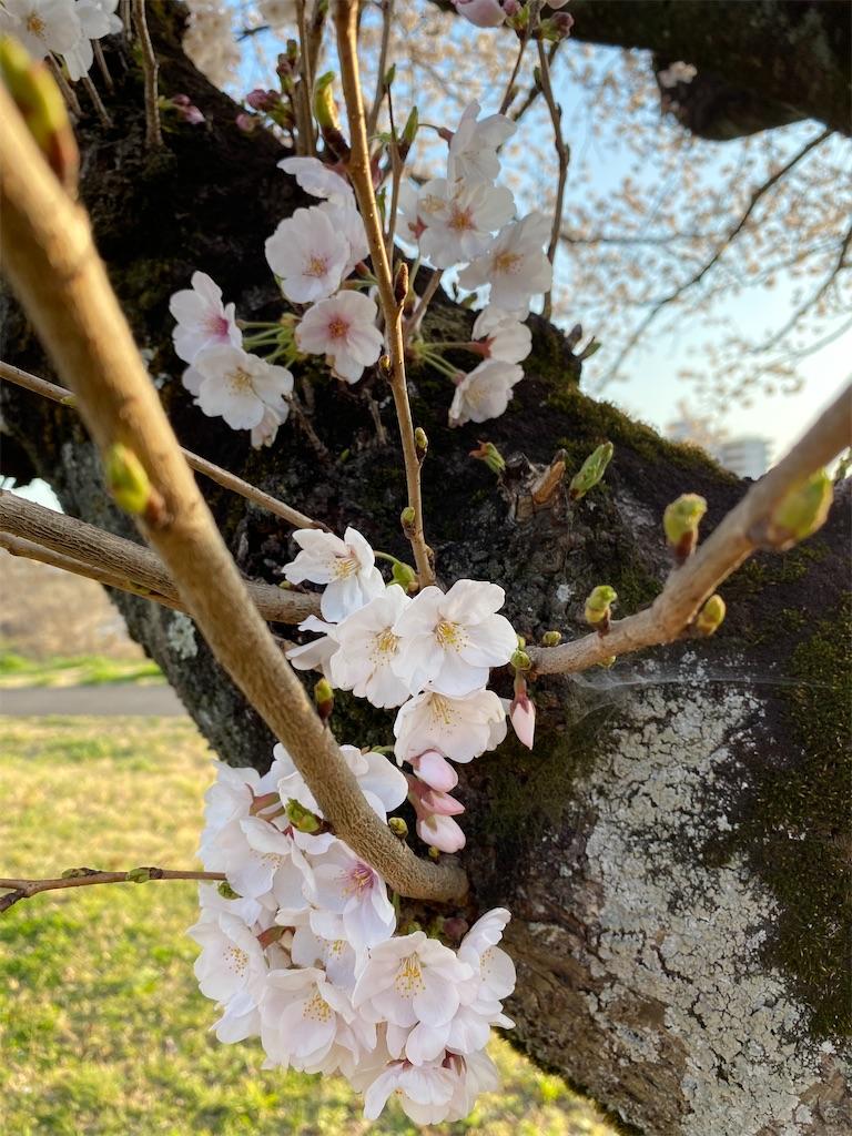 f:id:HIROAKI-ISHIWATA:20200326175816j:image