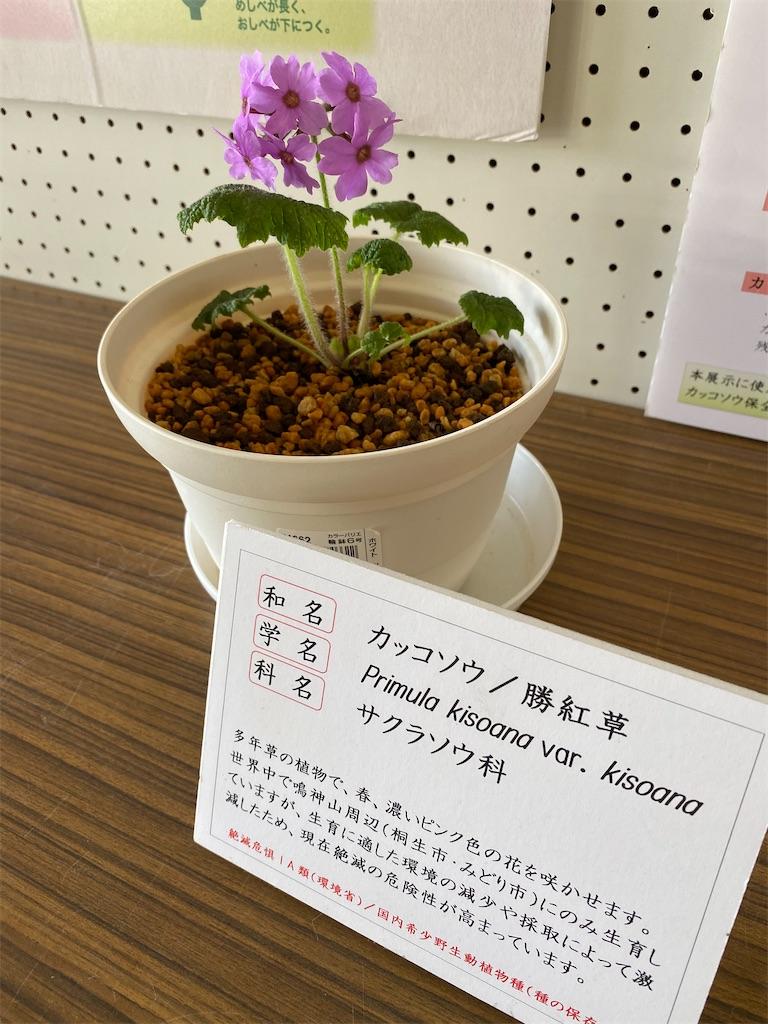 f:id:HIROAKI-ISHIWATA:20200406104441j:image