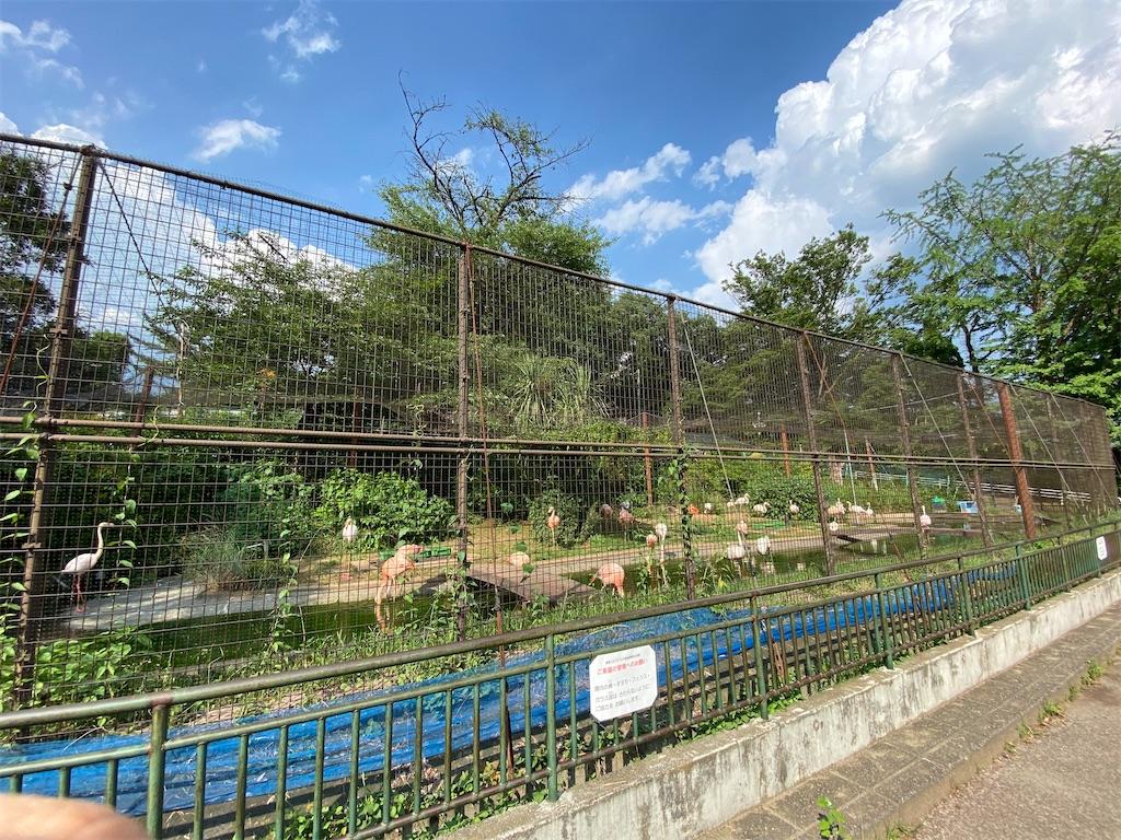 f:id:HIROAKI-ISHIWATA:20200616175053j:image