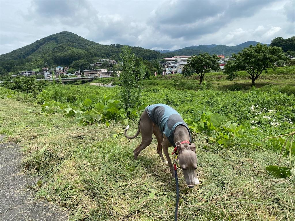 f:id:HIROAKI-ISHIWATA:20200724120232j:image