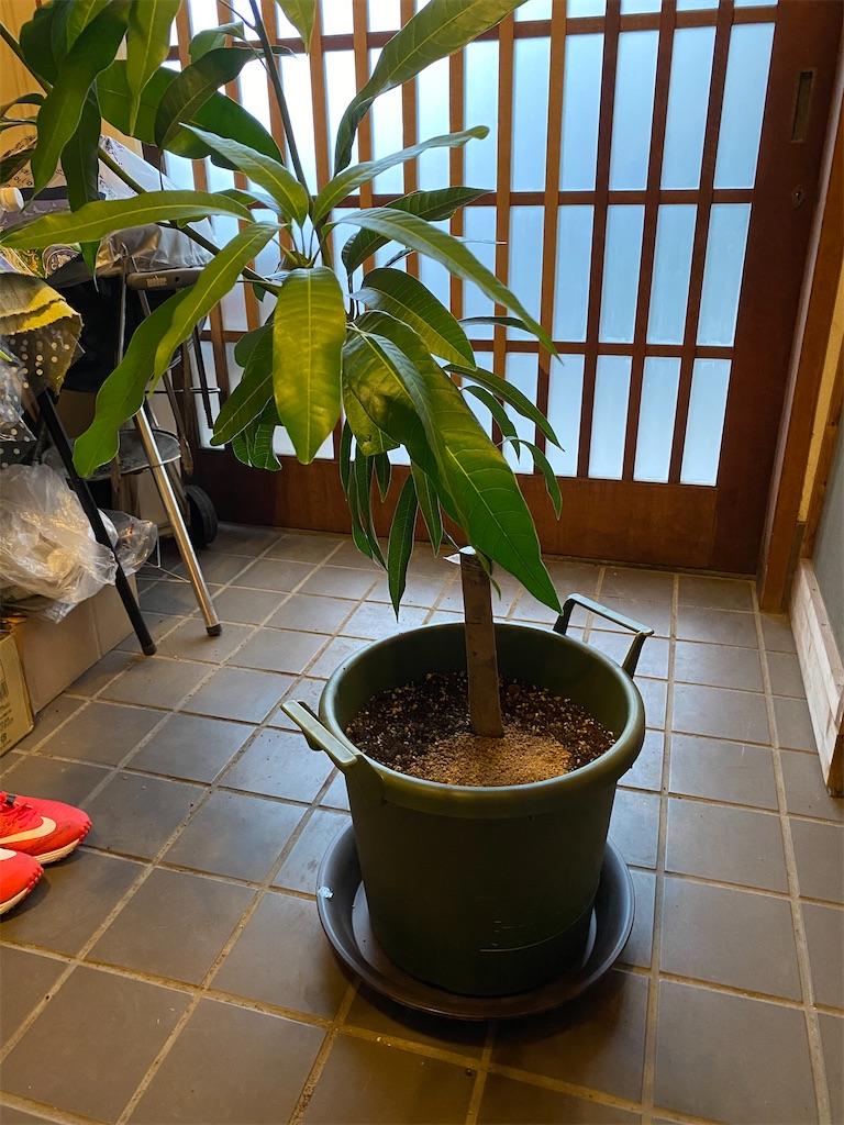 f:id:HIROAKI-ISHIWATA:20200905164637j:image