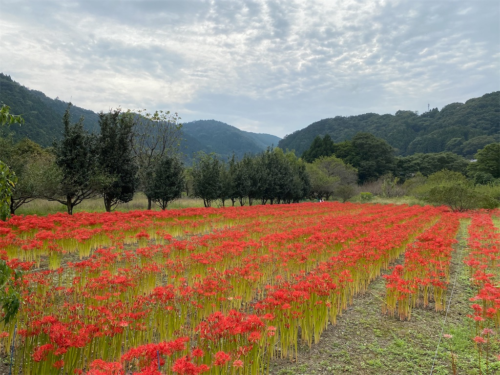 f:id:HIROAKI-ISHIWATA:20201004151654j:image