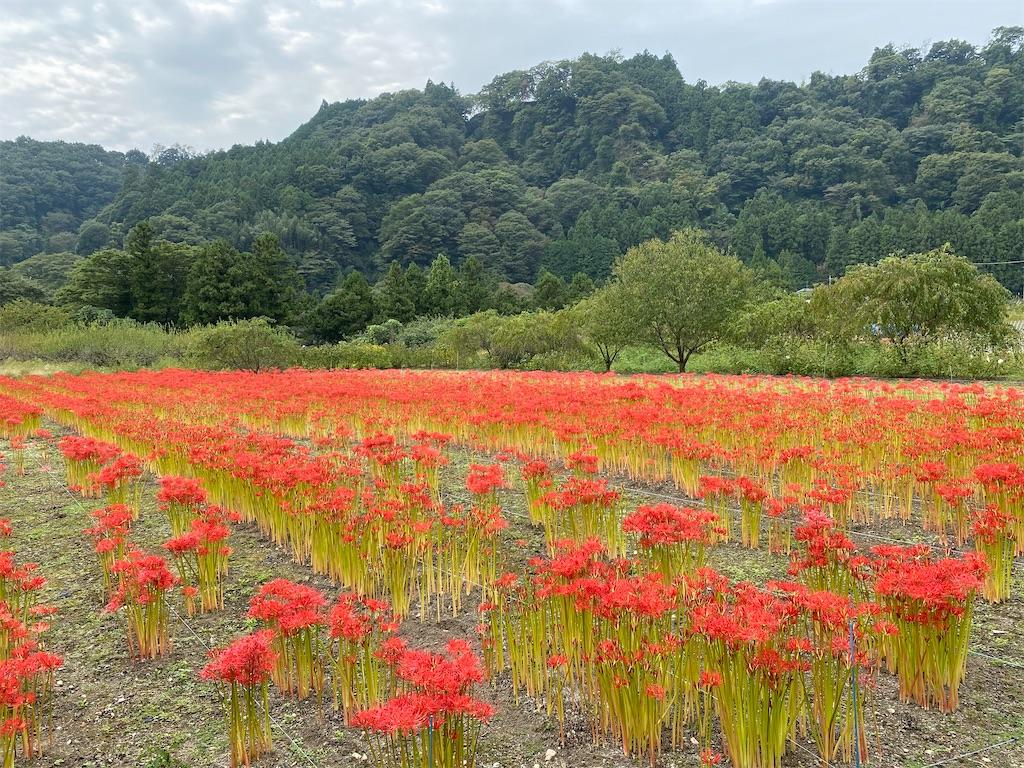 f:id:HIROAKI-ISHIWATA:20201004151719j:image