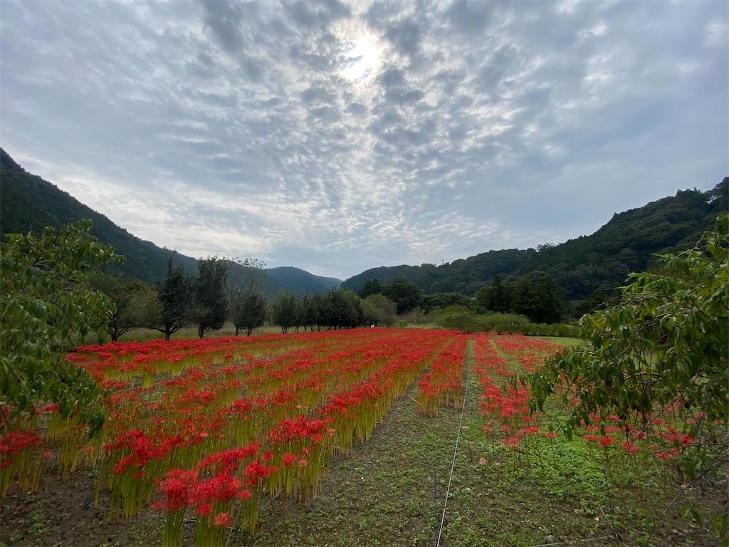 f:id:HIROAKI-ISHIWATA:20201004151821j:image