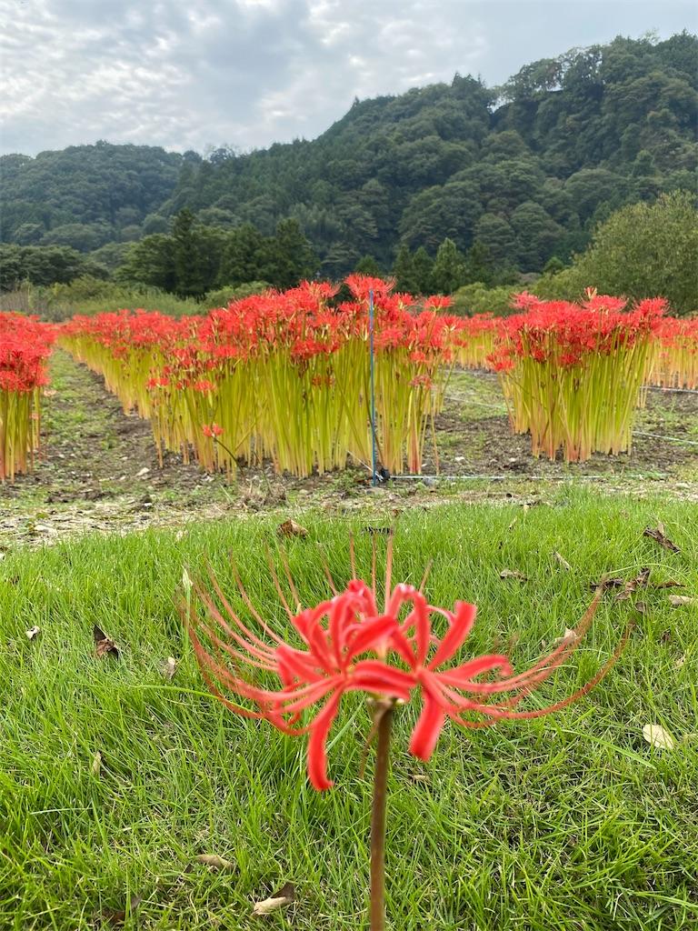 f:id:HIROAKI-ISHIWATA:20201004151840j:image