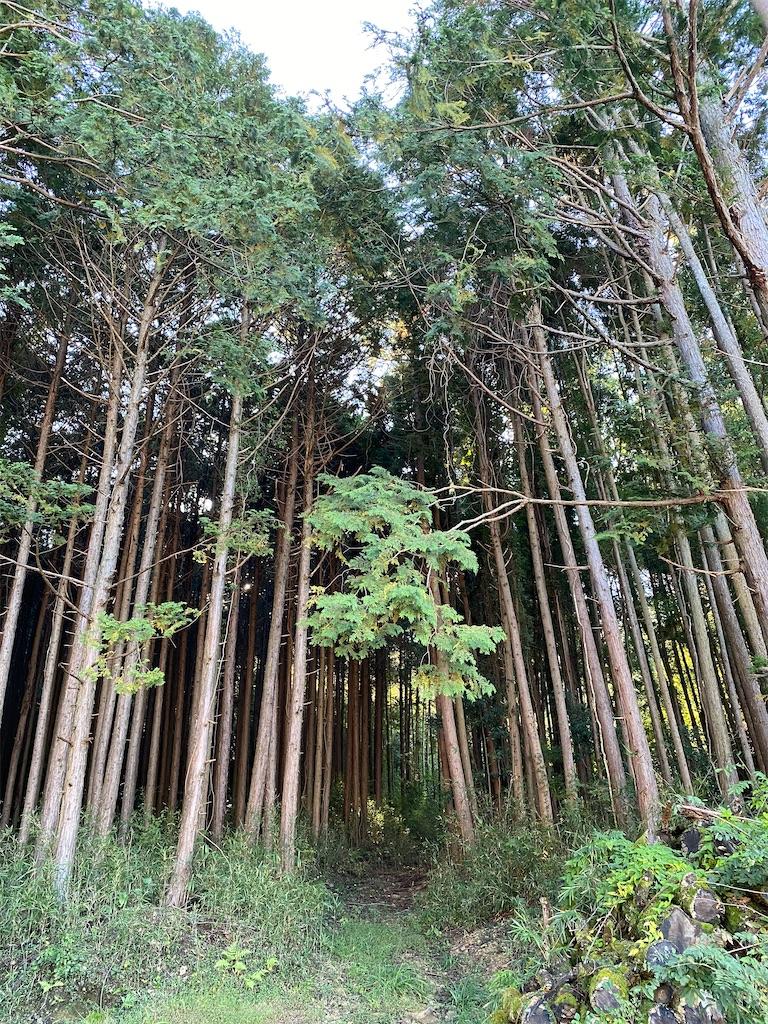 f:id:HIROAKI-ISHIWATA:20201025110459j:image