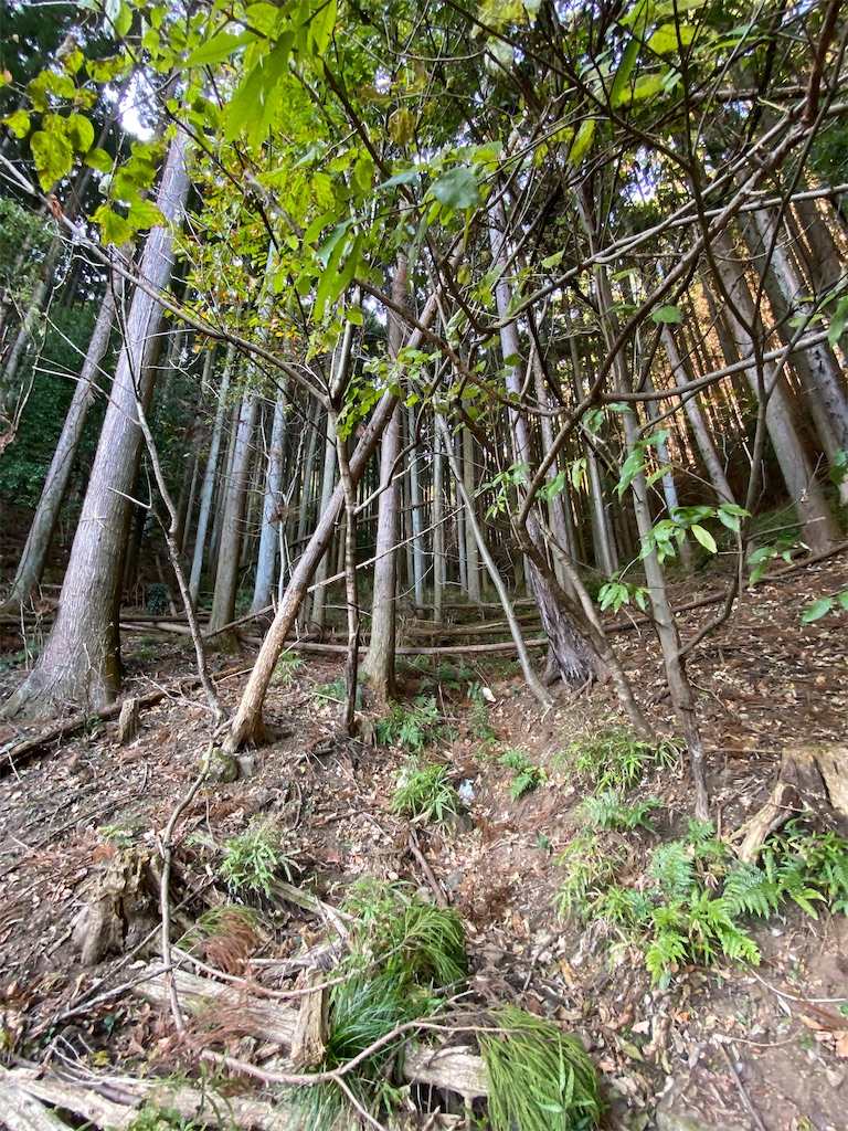 f:id:HIROAKI-ISHIWATA:20201122155322j:image