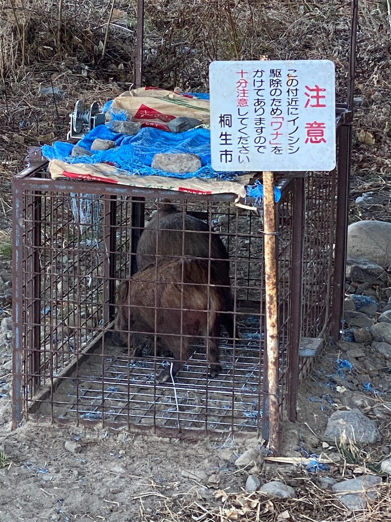 f:id:HIROAKI-ISHIWATA:20210131175412j:image