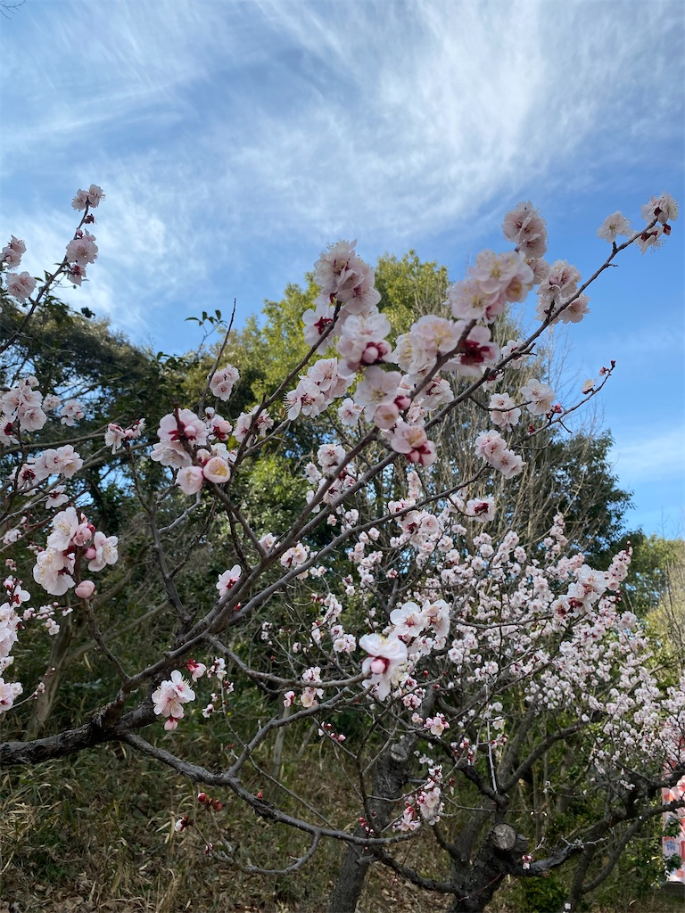 f:id:HIROAKI-ISHIWATA:20210306153927j:image