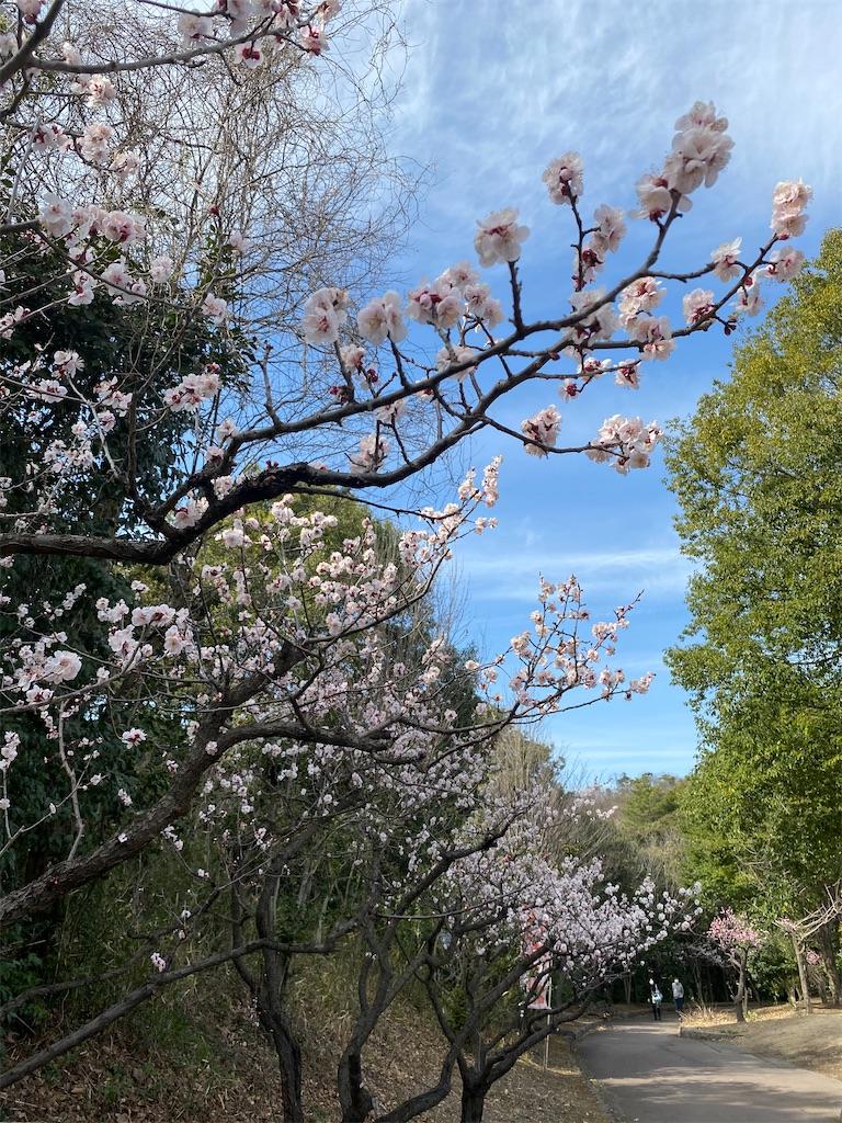 f:id:HIROAKI-ISHIWATA:20210306153935j:image