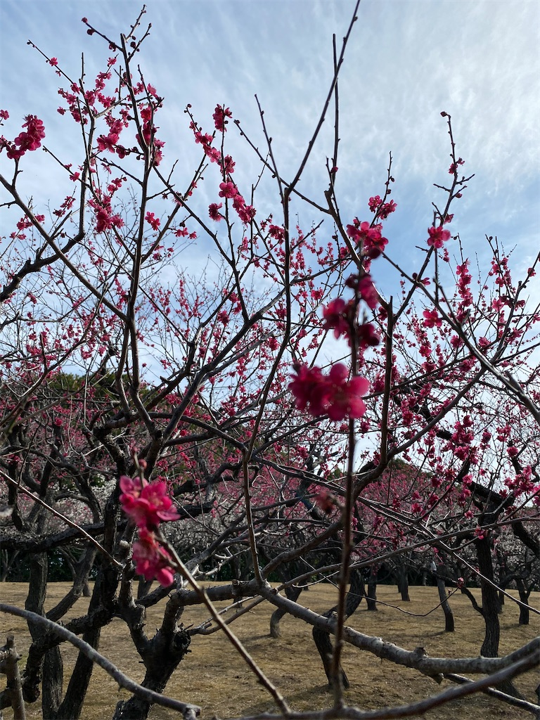 f:id:HIROAKI-ISHIWATA:20210306153943j:image