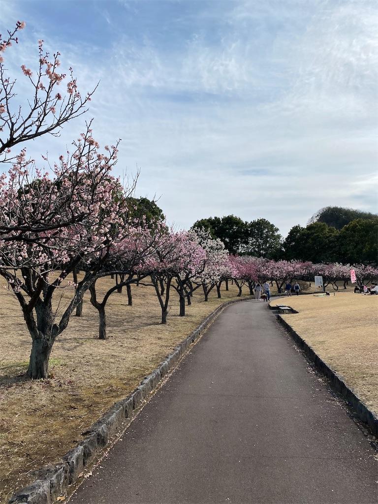 f:id:HIROAKI-ISHIWATA:20210306154018j:image