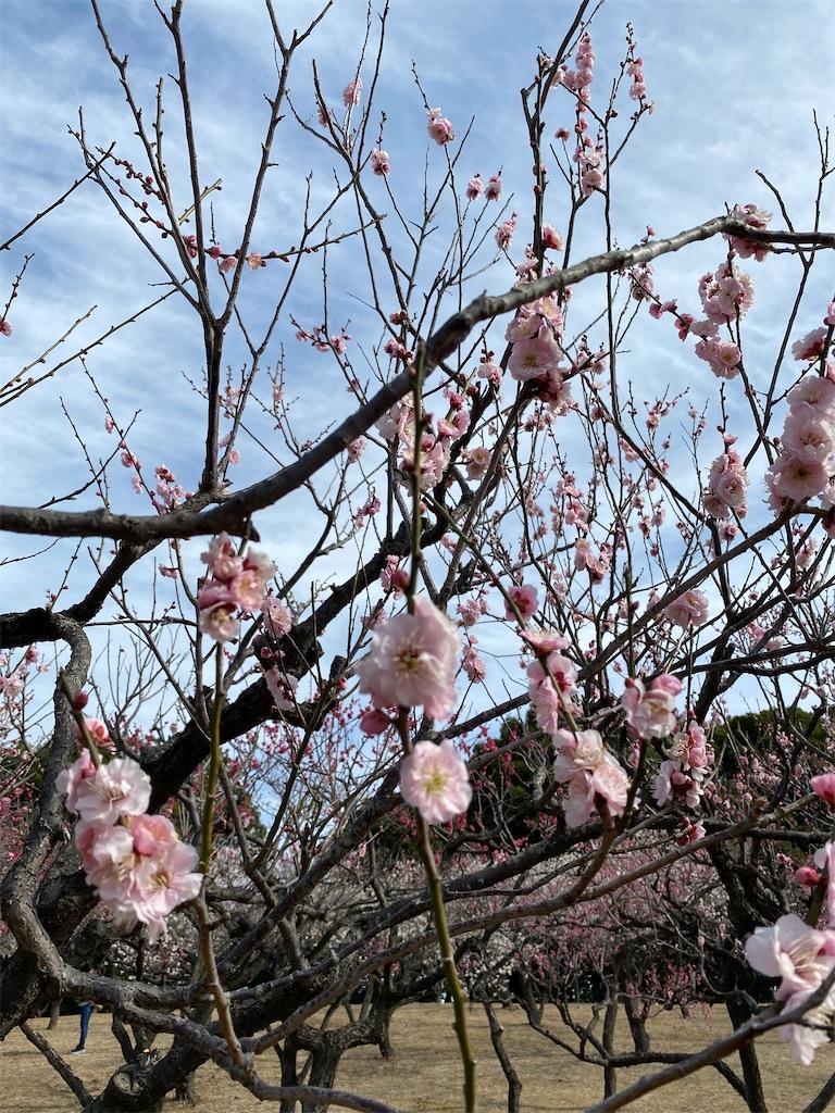 f:id:HIROAKI-ISHIWATA:20210306154046j:image