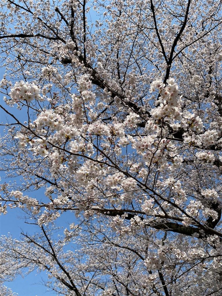 f:id:HIROAKI-ISHIWATA:20210326120459j:image