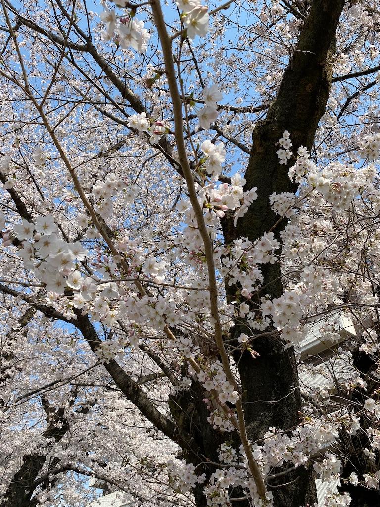 f:id:HIROAKI-ISHIWATA:20210326120528j:image