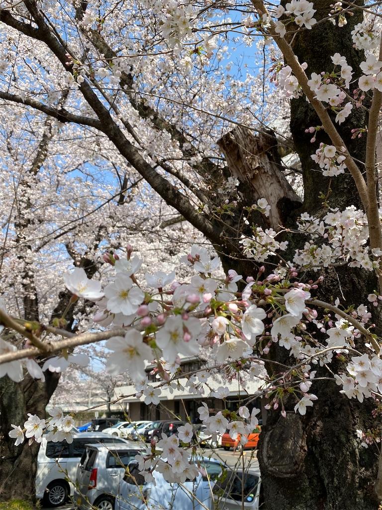 f:id:HIROAKI-ISHIWATA:20210326120531j:image