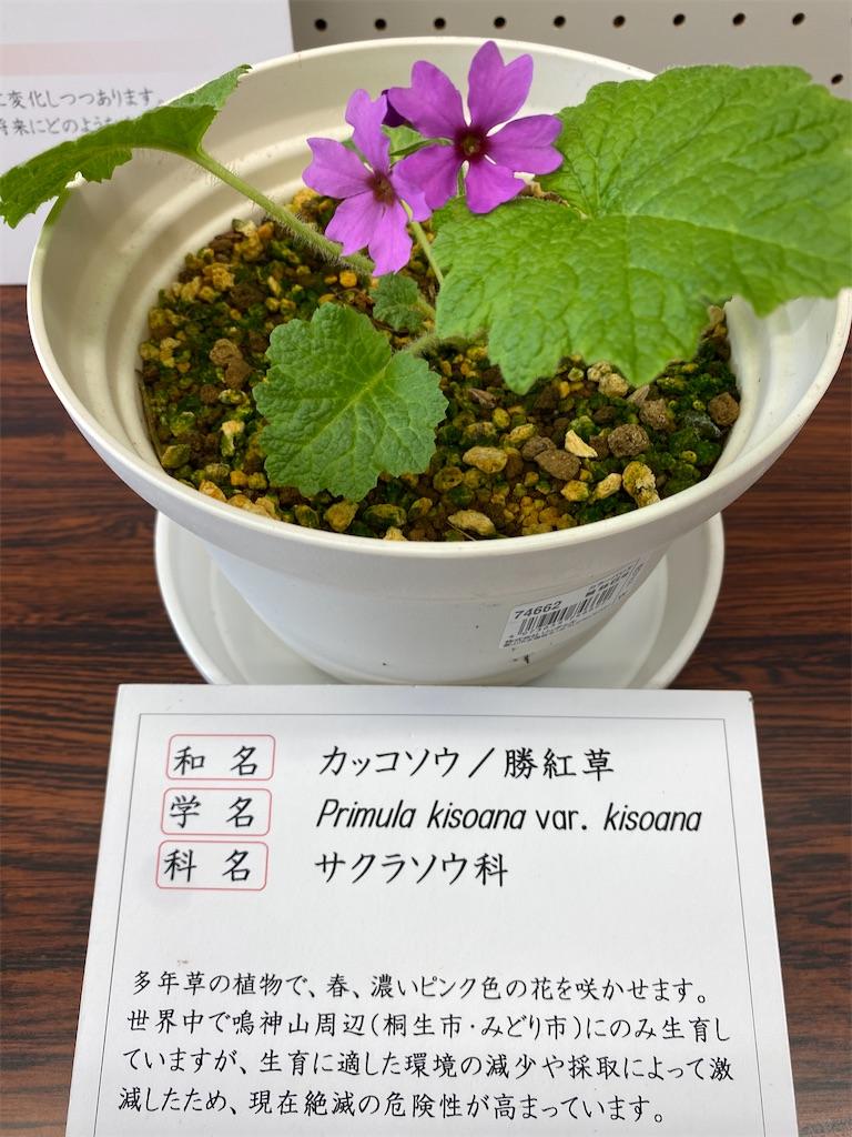 f:id:HIROAKI-ISHIWATA:20210406144711j:image