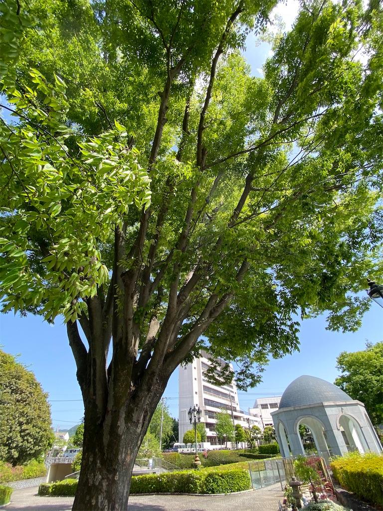 f:id:HIROAKI-ISHIWATA:20210430145253j:image
