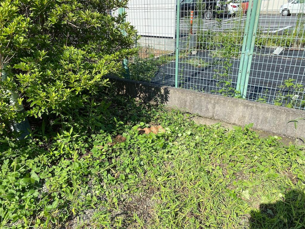 f:id:HIROAKI-ISHIWATA:20210801101226j:image