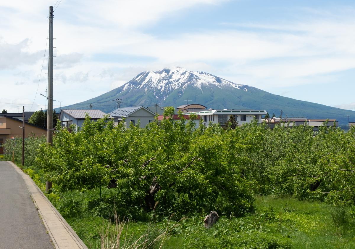f:id:HOSHIIMO:20200526145407j:plain