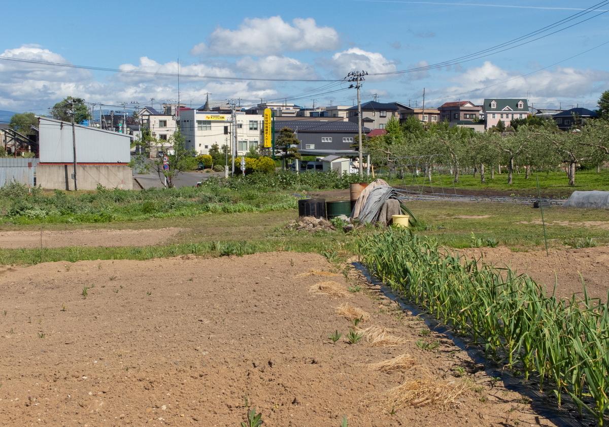 f:id:HOSHIIMO:20200526165536j:plain