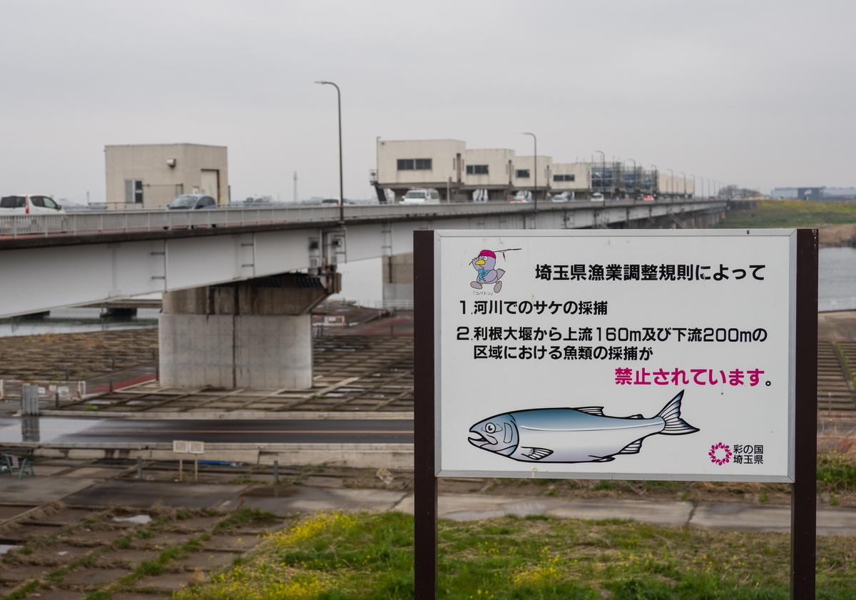 f:id:HOSHIIMO:20200721130606j:plain