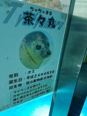 f:id:Hachi32TK:20170612202413j:plain