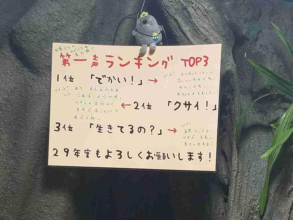 f:id:Hachi32TK:20170615230323j:plain