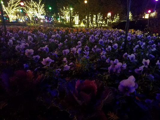 デンパーク花