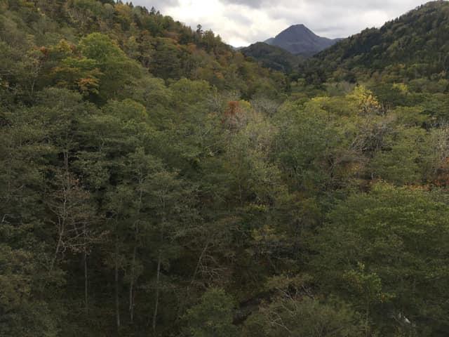 f:id:Hakuto-MA:20200303224729p:plain