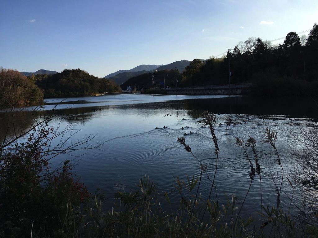 f:id:Hakuto-MA:20200708003321p:plain