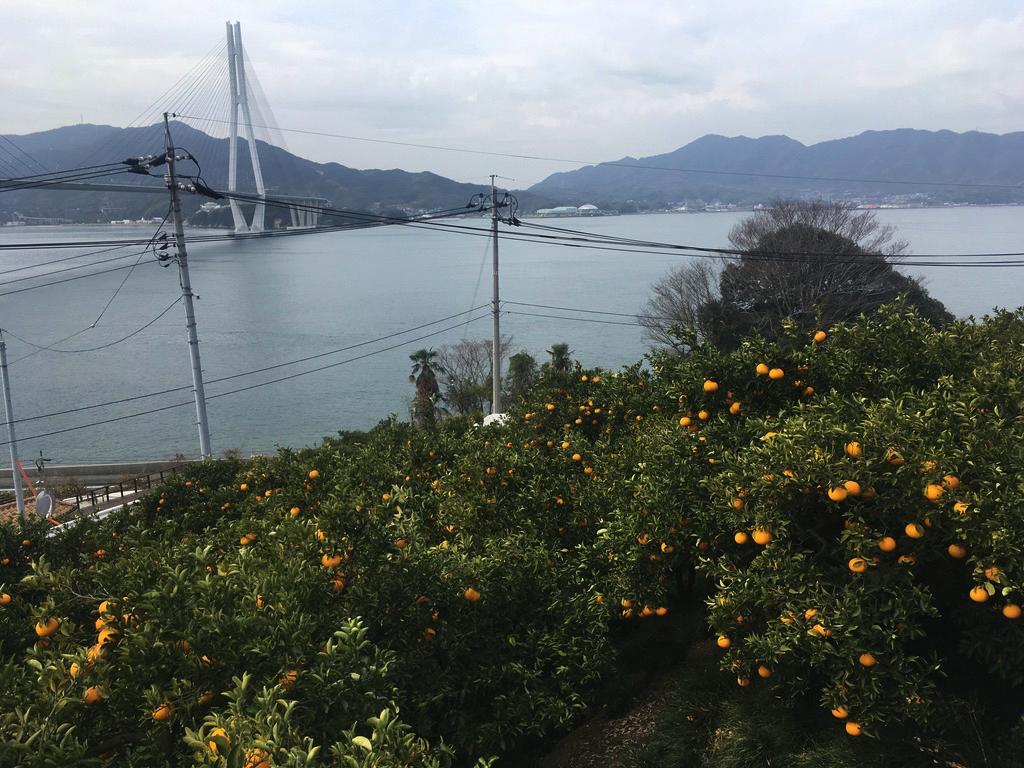f:id:Hakuto-MA:20200722222541p:plain