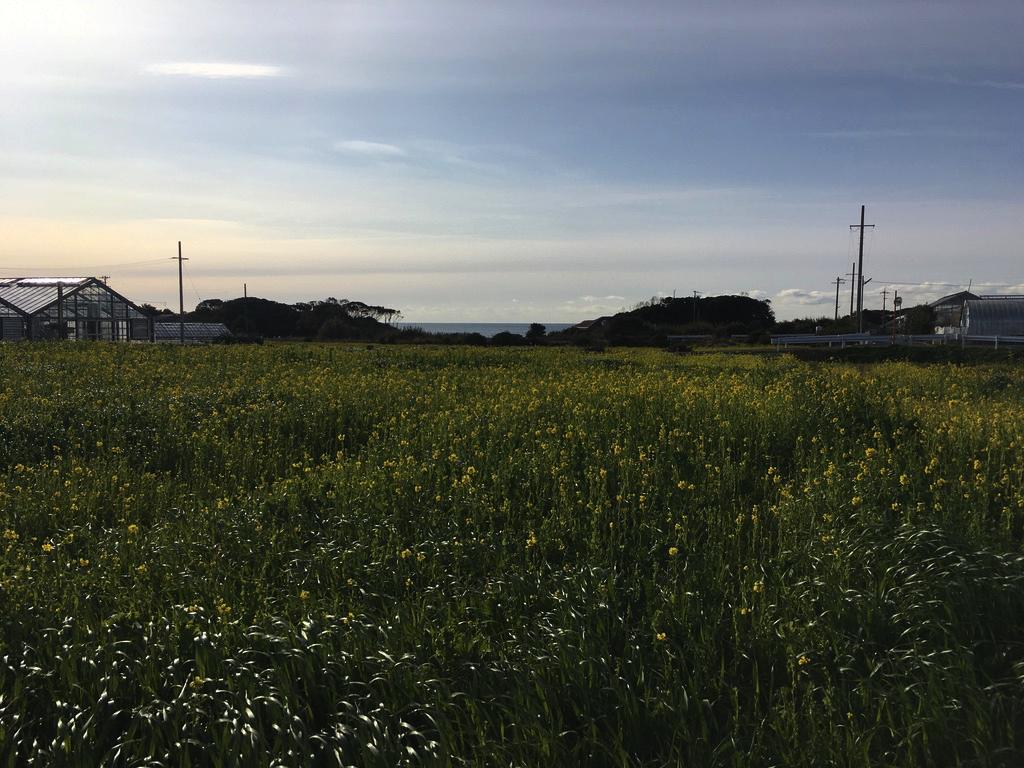 f:id:Hakuto-MA:20200811010341p:plain