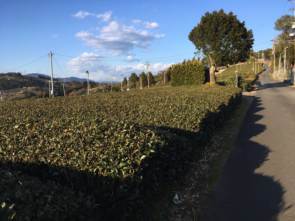 f:id:Hakuto-MA:20200811222455p:plain