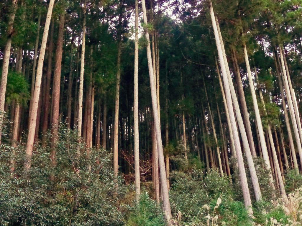 f:id:Hakuto-MA:20201217003636p:plain