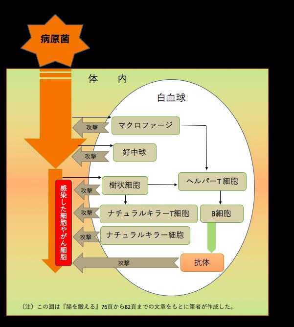 f:id:Hakuto-MA:20210126234039p:plain