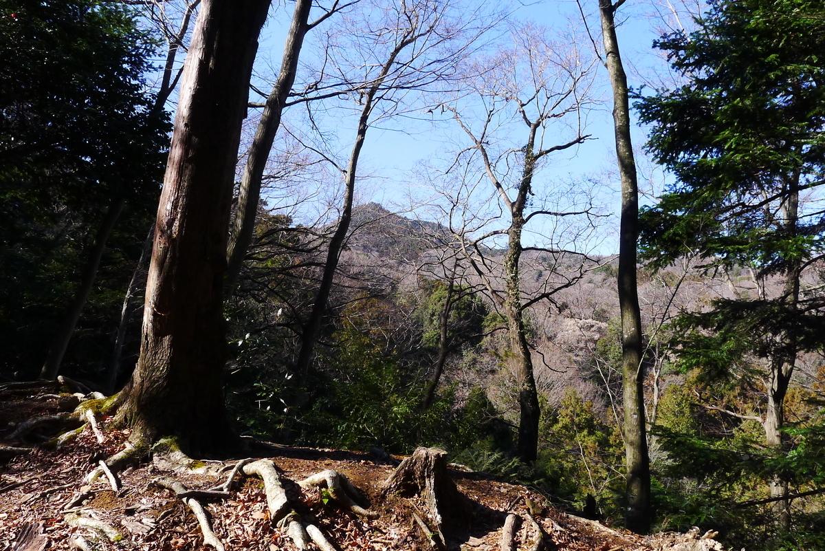 f:id:Hakuto-MA:20210221204711j:plain