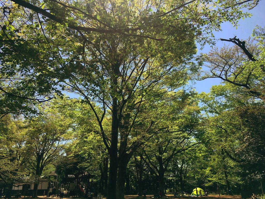 f:id:Hakuto-MA:20210411230219p:plain
