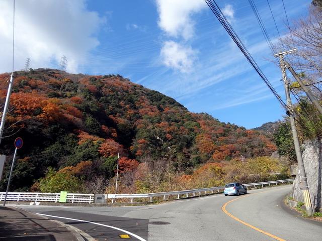 f:id:Hanamaru:20161208113130j:plain